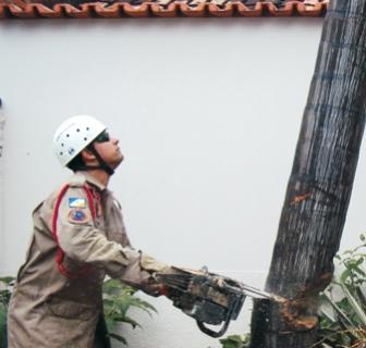 Corte de árvore bombeiros